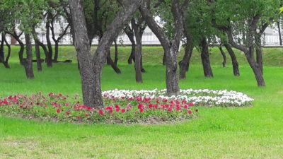 плодовый сад